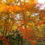 北海道紅葉3