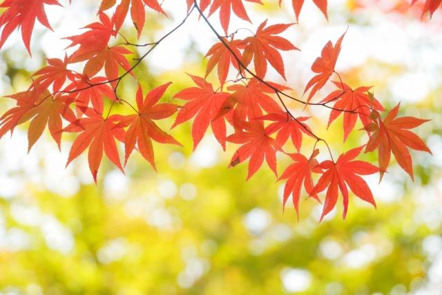 静岡紅葉1
