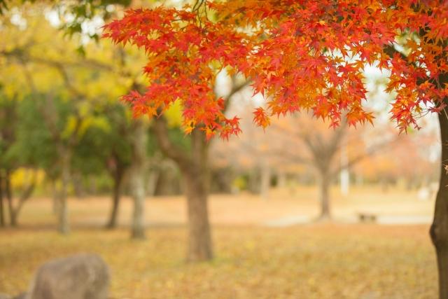 静岡紅葉4