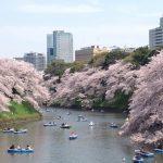 東京花見千鳥ヶ淵3