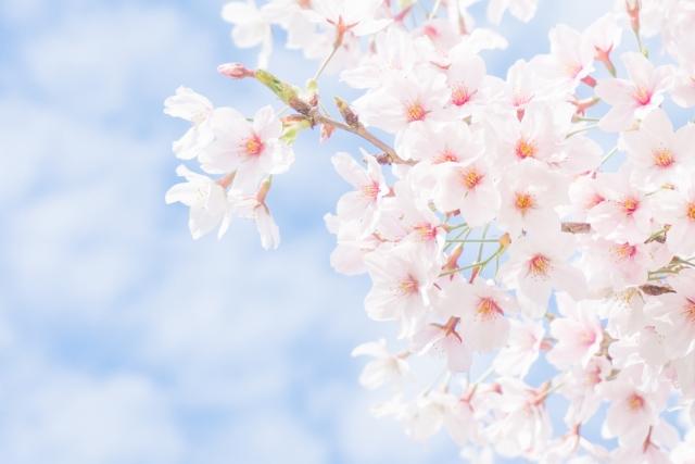 花見大阪1