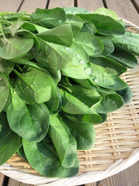 葉酸の栄養素3