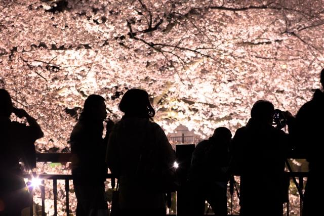 花見三重県